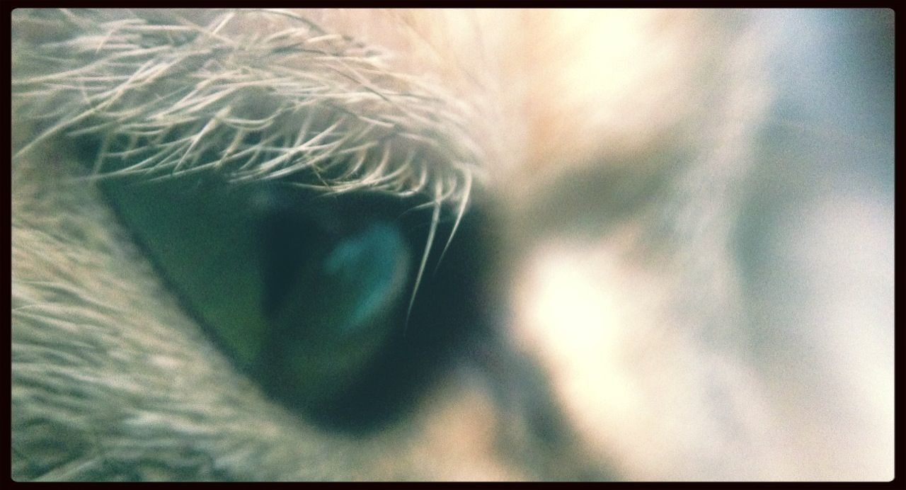 Cat Macro The Purist (no Edit, No Filter) Eye Of The Tiger