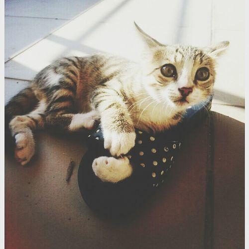 Cat ??