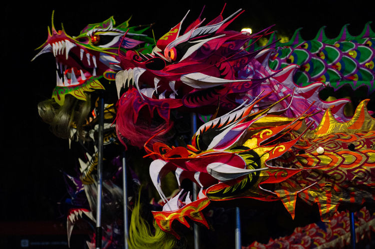 Dragon Beauty In Nature Black Background Chinese Dragon Chinese New Year Close-up Flower Flower Head Fragility Freshness Indoors  Multi Colored Nature Night No People Ribbon
