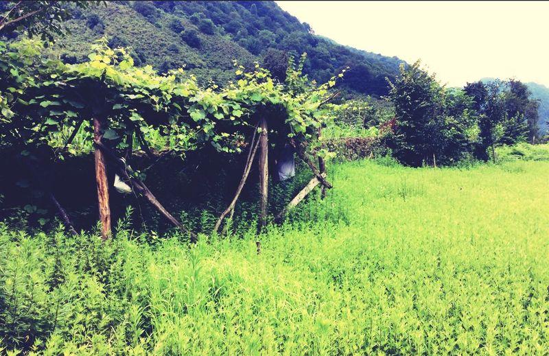 Yaşil köy 🍀🍃🌾🌾🌾🍄🍄🌳🌳🌲🌱🌲🌱🌲 First Eyeem Photo