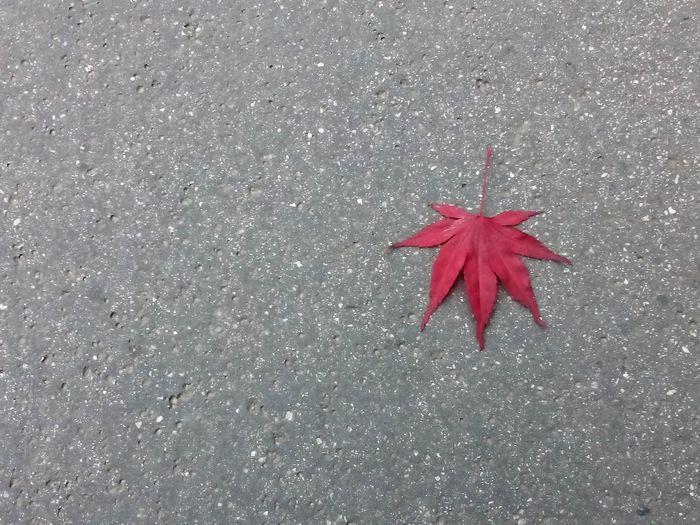 Herbst Autumn Blätter Leaves Leaves_collection Blatt Asphalt Leaves Falling Beton