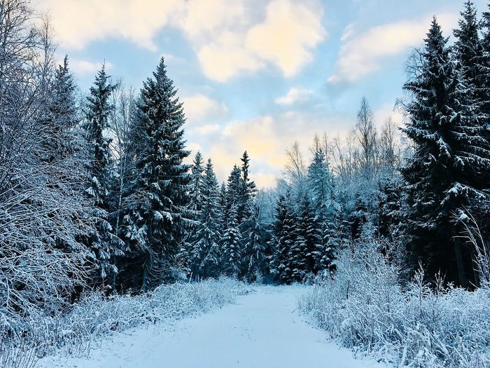 Let it Snow ❄️ Finland Tree Sky Plant Nature Cloud - Sky Beauty In Nature No People Coniferous Tree Scenics - Nature Snow Winter Outdoors Tranquility Cold Temperature