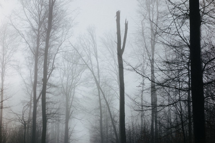 The fog and the woods. Wallacianism Atmospheric Mood Bare Tree Beauty In Nature Blackandwhite Branch Day Fog Forest Growth Mist Moody Weather Nature No People Outdoors Spooky Tranquility Tree Tree Trunk Woods