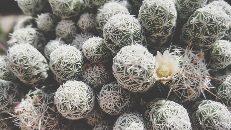 Backgrounds Full Frame Green Color Close-up Plant No People Growth Indoors  Nature Day Cactus