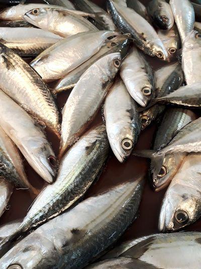 Market fish for sale