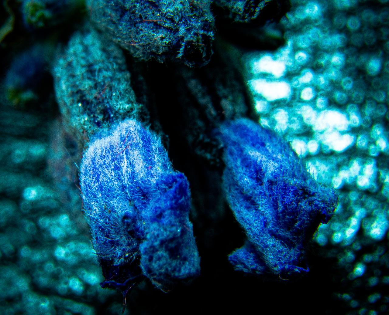CLOSE-UP OF BLUE ROCKS