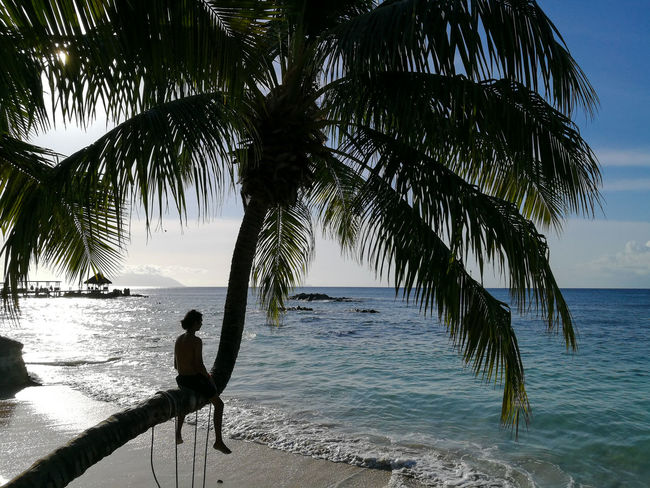 Sea Beach Silhouette Tree Horizon Over Water Water One Person Nature Outdoors Vacations Full Length People Fishing One Man Only Tranquility Adults Only Adult Sky Sand Day Travel Destinations Berjaya Beach Seychelles Aesthetic Travel Photography Beauty In Nature Lost In The Landscape Connected By Travel