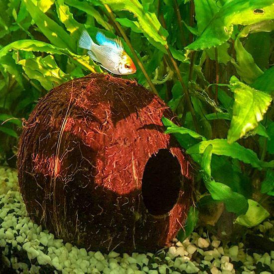Farbenpracht.... Samsung Photography S6edge Aquaristik Barsch Sonnenlicht Kokosnuss
