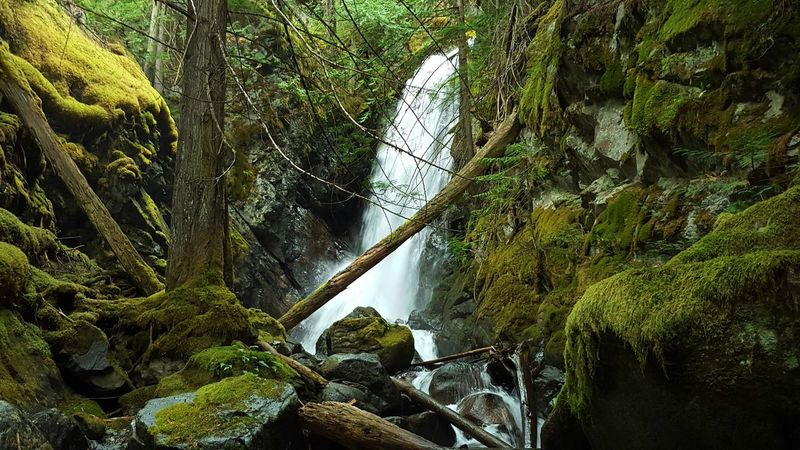 Nature Natural Beauty Rich Colors Waterfall Moss Forest Rain Forest Landscapes With WhiteWall The KIOMI Collection