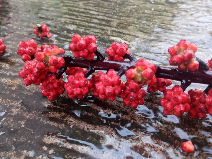 Red Day No People Wet Nature Outdoors High Angle View Fruit Water Freshness Close-up Growth Cold Temperature Snow Beauty In Nature Garden Gate Stpeter