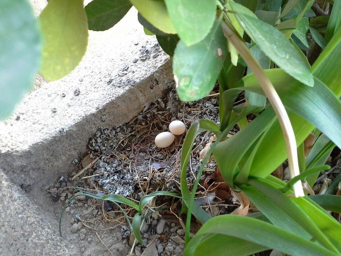 Leaf Green Color Fragility Close-up Growth Freshness High Angle View Plant Nature Uncultivated Day New Life Outdoors Beauty In Nature Tranquility Leaves Growing Botany No People Green Bird Photography Egg Bird Eggs