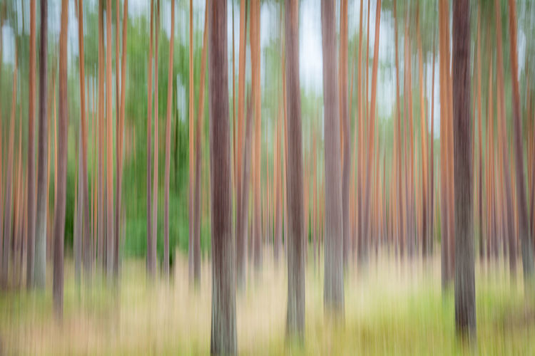 Backgrounds Beauty In Nature Forest Graphical Nature No People Outdoors Wood Art, Drawing, Creativity Art Artphotography Forest Trees Forest Photography Nikon D7100