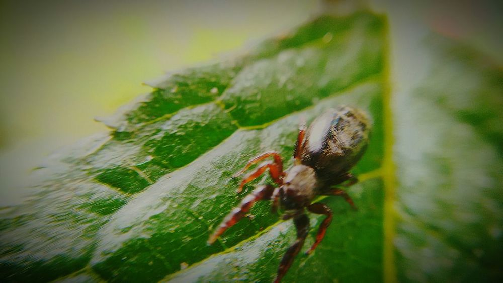 Spider Macro Spider Macro Macro Insects Macro Photography Macro_collection Taking Time To See The Little Things