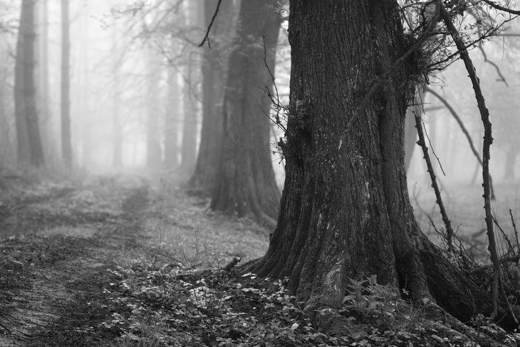 Beauty In Nature Fog Forest Landscape Masuren Masuria Mazury Morning Nature No People Path Tree WoodLand