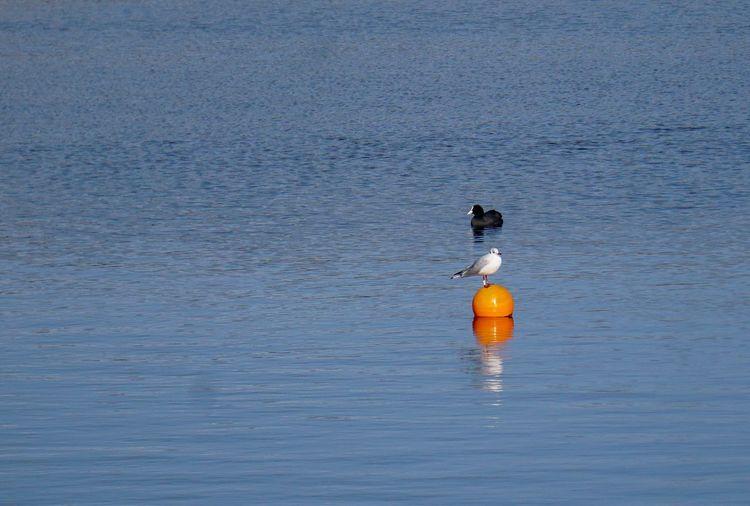 Bird floating on the sea