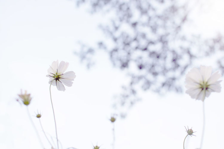 Low angle view of white flower against sky
