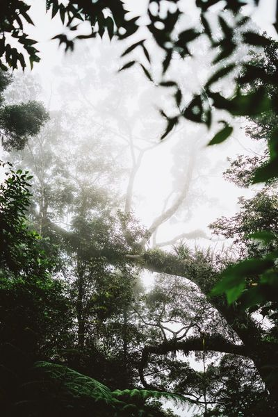 foggy forest on the way to Wae Rebo Tree Nature Beauty In Nature Forest Branch Plant Leaf Outdoors Day No People Rainforest Jungle Green Moss Foggy Misty Magic Fairytale  Ferns Lush Greenery Vegetation INDONESIA Flores Southeastasia Trekking The Great Outdoors - 2017 EyeEm Awards Lost In The Landscape Perspectives On Nature Be. Ready.