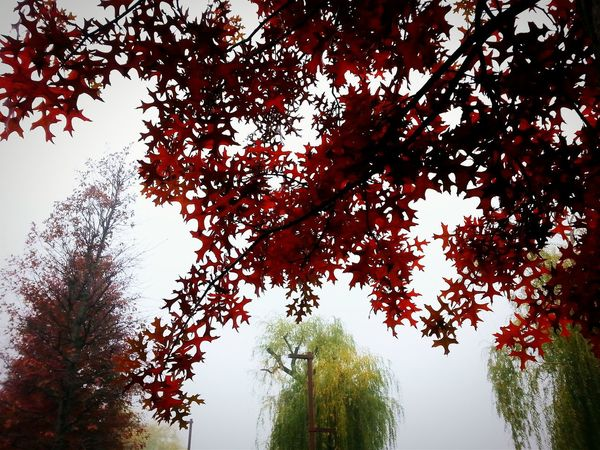 Tree in the sky Nature Fog The Beauty Of Nature Melancolic