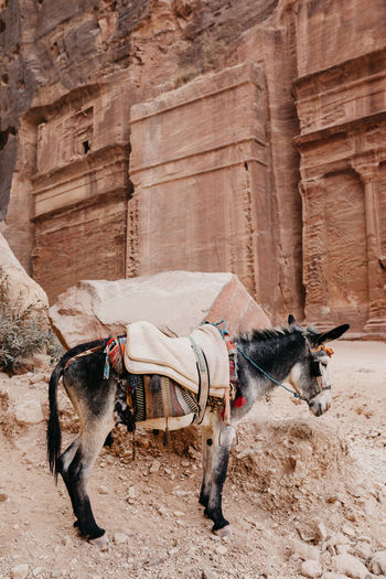 Desert Exploring Jordan Nature Petra Tourist Tourist Attraction  Travel Traveling Wadi Rum World Heritage Adventure Camels Caves Donkey Friendship Horseback Riding Jeep Nature_collection Old Buildings Stones Tourism Travel Destinations Wanderlsut