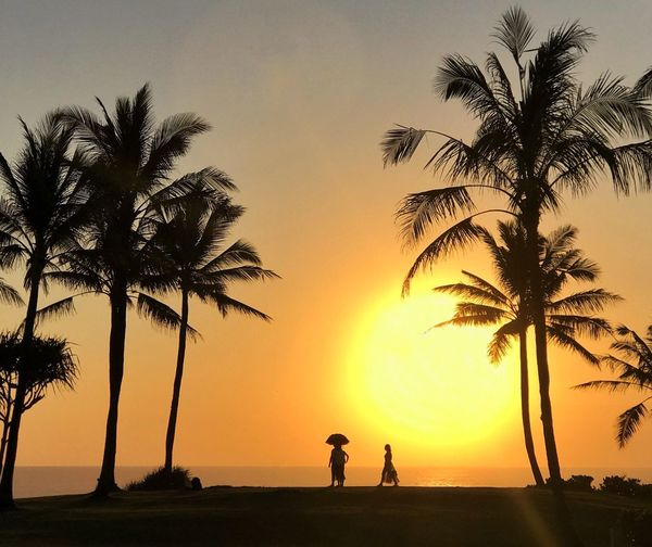 Palm Tree Sunset Tree Silhouette Beauty In Nature Scenics Nature Leisure Activity Tranquil Scene Water Sea Sky Lifestyles Sun Tropical Paradise Travel Destinations Tranquility Bali Live For The Story Paint The Town Yellow Lost In The Landscape Perspectives On Nature Be. Ready. An Eye For Travel