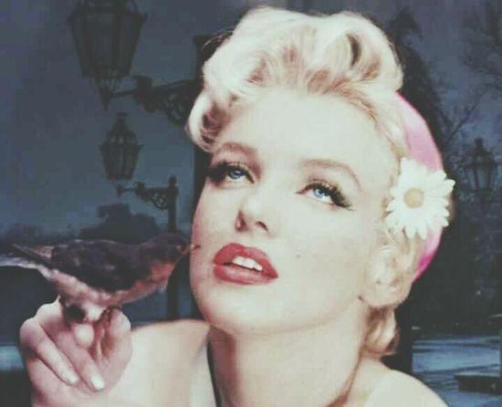 Marilyn Monroe Beautifulwoman Beauty Bird Red Camomile Daisy Woman Redlips Oldiesbutgoldies