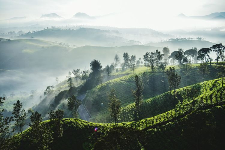 Tree Tea Crop Mountain Rural Scene Fog Agriculture Dawn Beauty Field Tropical Climate Rice Paddy Rice - Cereal Plant Plantation Asian Style Conical Hat Asian Style Conical Hat Irrigation Equipment Cultivated Land Ho Chi Minh City Terraced Field Tropical Tree Satoyama - Scenery Laos Valley Agricultural Field