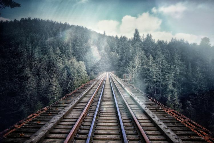Railroad tracks in forest against sky