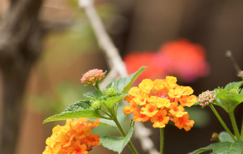 Close-up of fresh orange flowers blooming outdoors