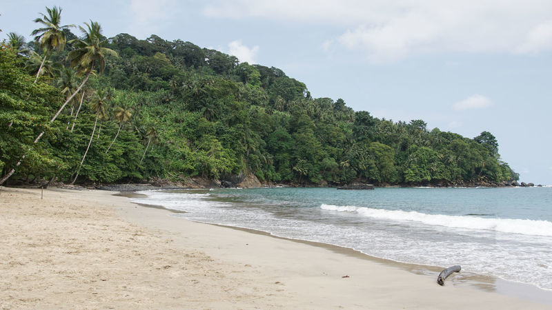 Praia Micondo, Sao Tome and Principe, Africa Africa Beach Beauty In Nature Coast Coastline Day Landscape Nature No People Outdoors Praia Micondo Sand Sao Tome And Principe Scenery Scenics Sea Shore Tourism Tourist Attraction  Tranquility Travel Travel Destinations Tree Water West Africa