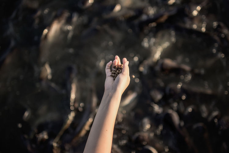 Cropped hand of woman holding seeds