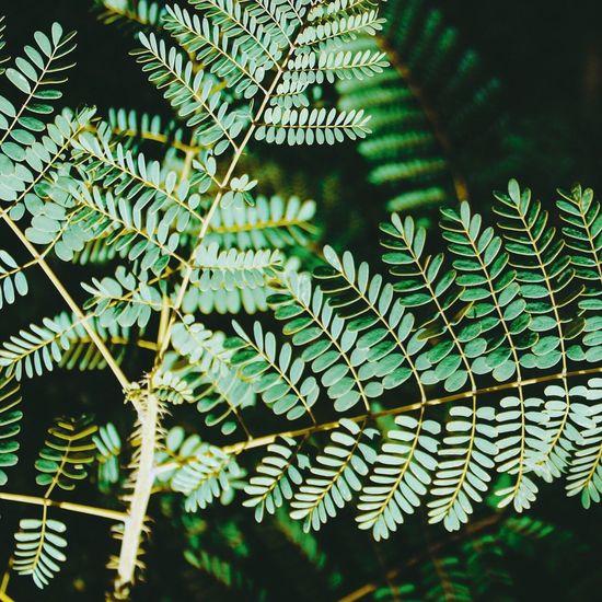 Nature Leaf Plant Close-up First Eyeem Photo