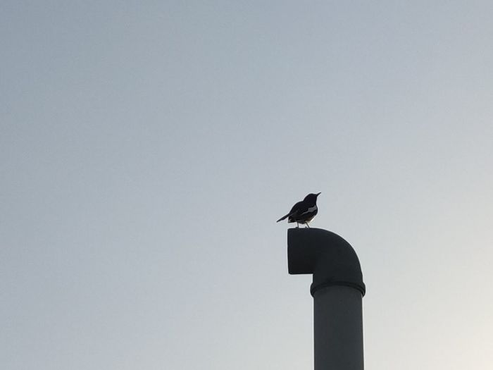 Low angle view of bird perching on a building