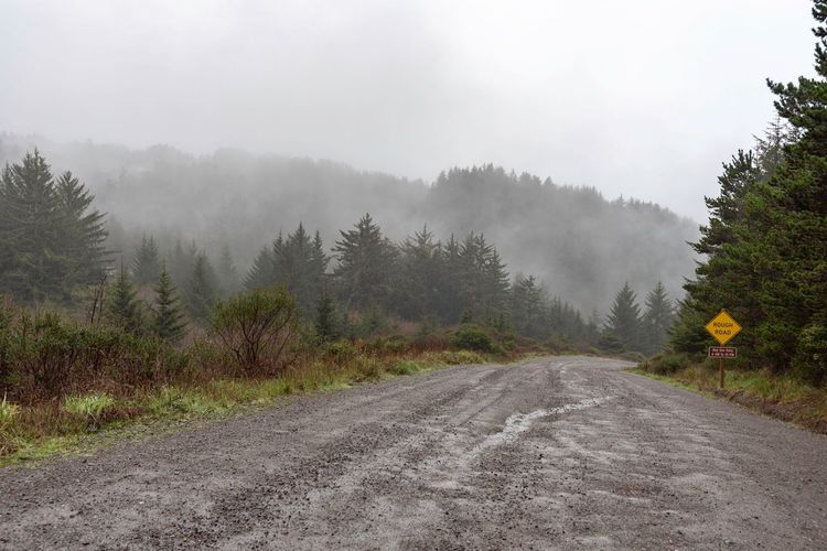 Landscape of dirt road leading into misty hills in Oregon Dirt Road Trees Foggy Morning Misty Morning Oregon Tree Plant Fog Beauty In Nature Nature Tranquility Land Scenics - Nature Growth Tranquil Scene Day Sky No People Non-urban Scene The Way Forward Direction Landscape Road Idyllic
