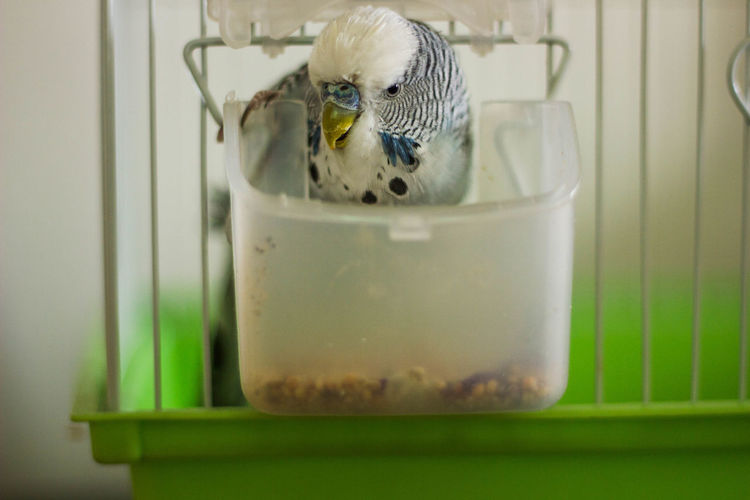 Close-up of bird in drinking glass