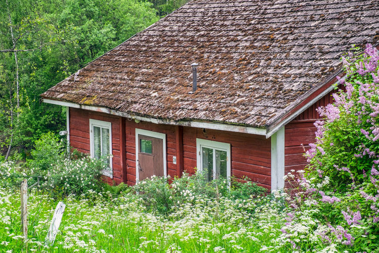 Old and abandoned cottage with lush green plants at summer day in Finland Built Structure Architecture Building Plant Building Exterior House Growth Roof Nature No People Day Green Color Outdoors Window Cottage Beauty In Nature Roof Tile Tree Finland Abandoned Vintage Old Red Decay Flower