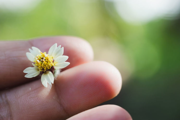 Human Hand Hand Human Body Part Flowering Plant Flower Plant One Person Holding Finger Human Finger Close-up Body Part Real People Vulnerability  Fragility Unrecognizable Person Freshness Beauty In Nature Day Nature Flower Head Outdoors