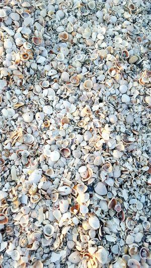 She sells seashells on the seashore.... Shells Beach Shells Sand Broken Shells Nature Gulf Of Mexico Saltlife Seashells Florida