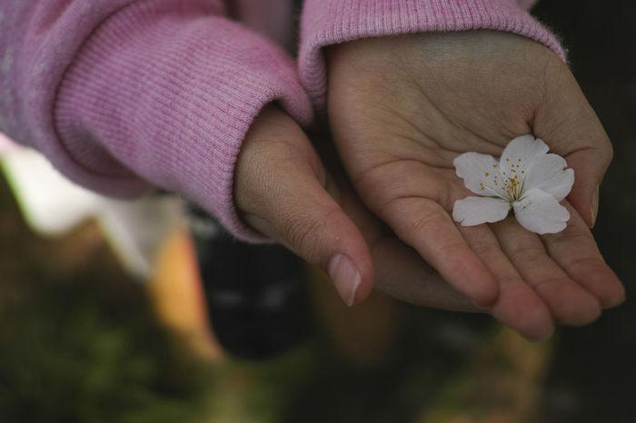 EyeEm Tokyo MeetUp 12 Girl Hand Hand And Flower Hands Sakura Sakura2016