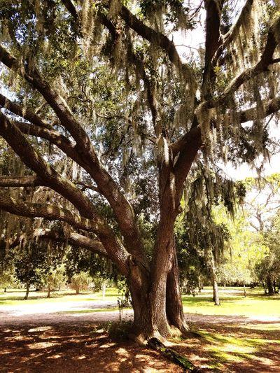 Tree Branch Tree Trunk Sunlight Sky Landscape The Great Outdoors - 2018 EyeEm Awards