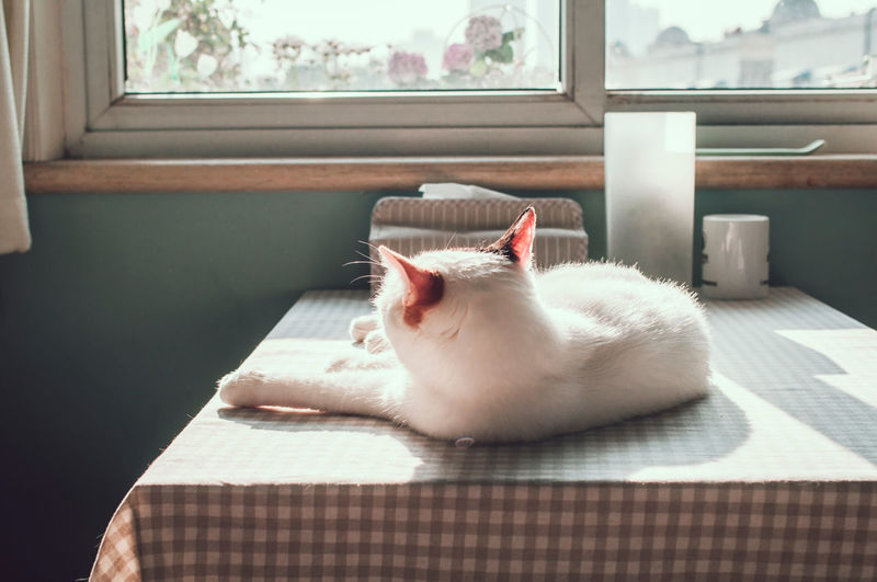 Cat Lying On Dining Table At Home