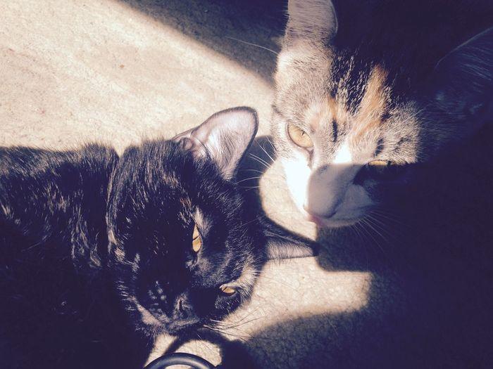 Furbaby Cats Kitten Love Cute Cute Pets My Fur Babies Best Friends