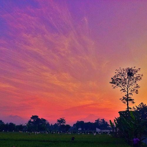 Sunset Silhouettes The Landscapist - 2014 EyeEm Awards