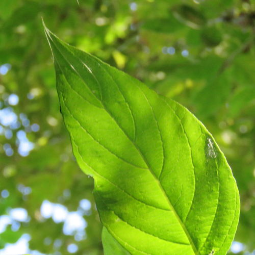 Beauty In Nature Close-up Day Drop Focus On Foreground Food And Drink Freshness Green Color Growth Leaf Leaf Vein Leaves Nature No People Outdoors Plant Plant Part RainDrop Tranquility Water Wet