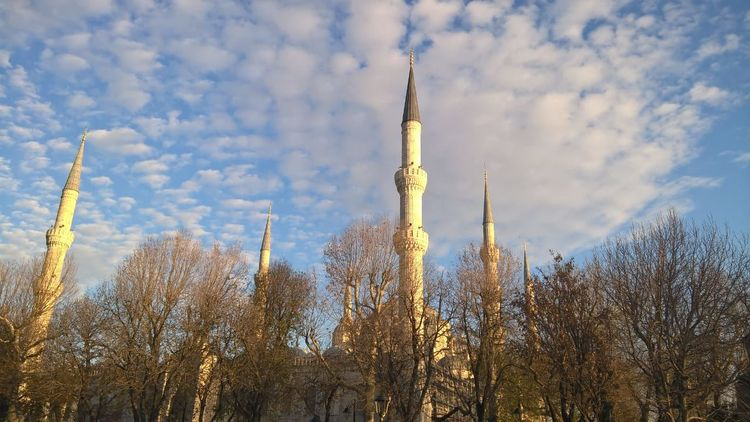 Blue Mosque Sultan Ahmed Mosque Sultanahmet Architecture Bare Tree Beauty In Nature Built Structure Cami Day Fatih Growth Low Angle View Masjid Mosque Nature No People Outdoors Plant Sky Sultanahmetcamii Tree