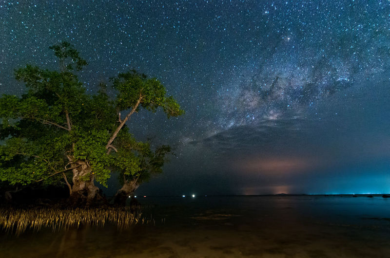 milky way rise above trees Night Star - Space Tree Sky Water Scenics - Nature Plant Tranquility Beauty In Nature Astronomy Tranquil Scene Nature Space Sea Land Beach Illuminated Galaxy Star No People Outdoors Milky Way