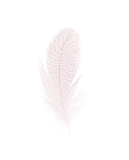 Feather  Fragility Vulnerability  Softness Close-up Lightweight No People Plant Studio Shot Nature Cut Out White Background Beauty In Nature White Color Freshness Flower Simplicity Still Life Flowering Plant Copy Space Flower Head