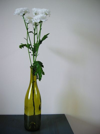 White chrysanthemums in bottle on table against wall