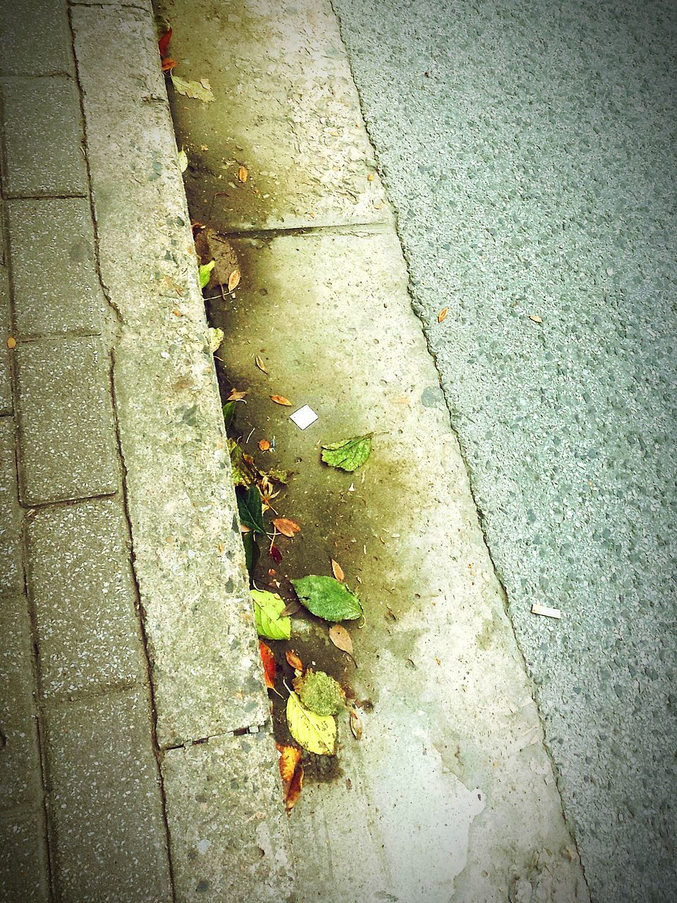 leaf, autumn, change, high angle view, dry, outdoors, street, day, sidewalk, no people, nature, road, close-up, maple