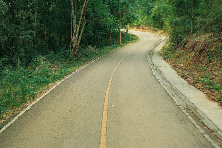 Road in the woods Road The Way Forward Transportation Tree Forest Nature Day Land WoodLand Outdoors Long Plant
