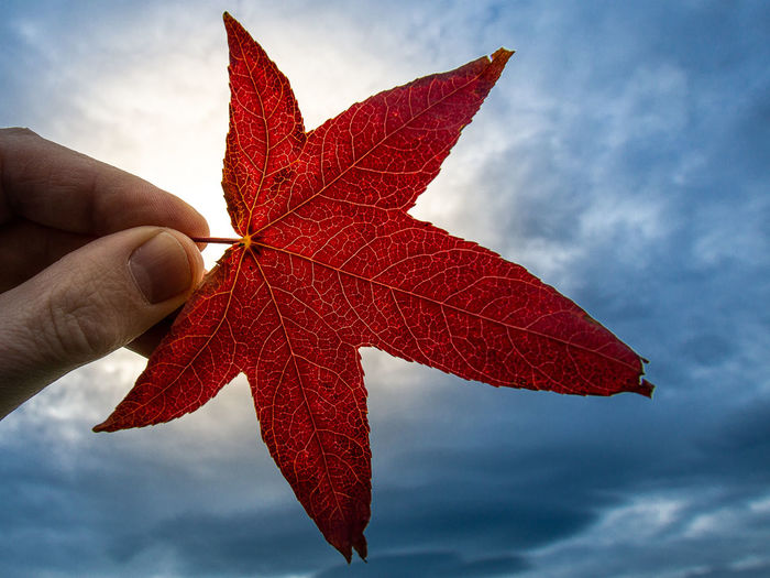 Close-up of hand holding maple leaf against cloudy sky
